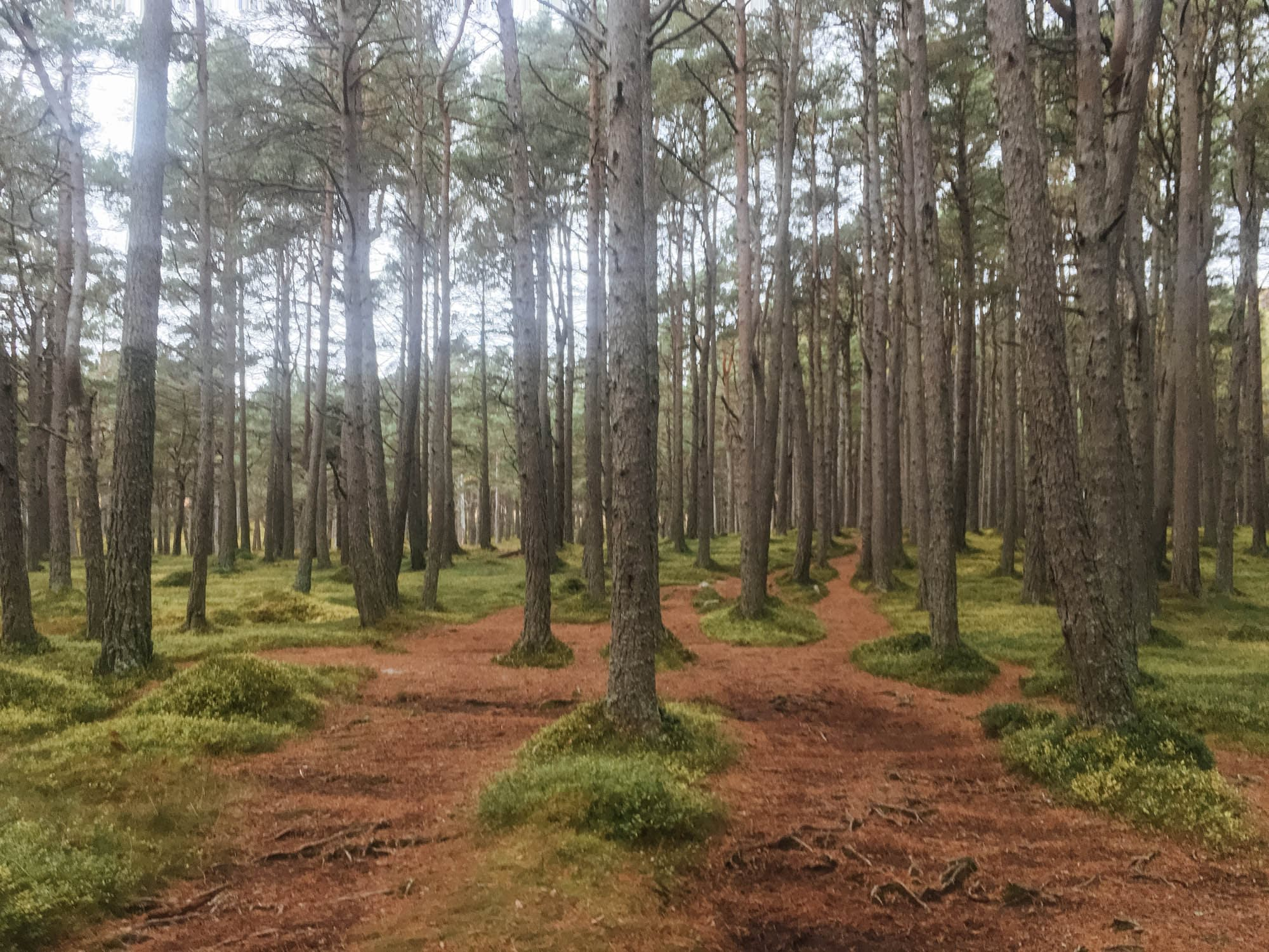 Cairngorms walking routes