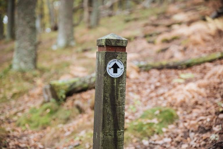 Hiking near Ballater Craigendarroch hill