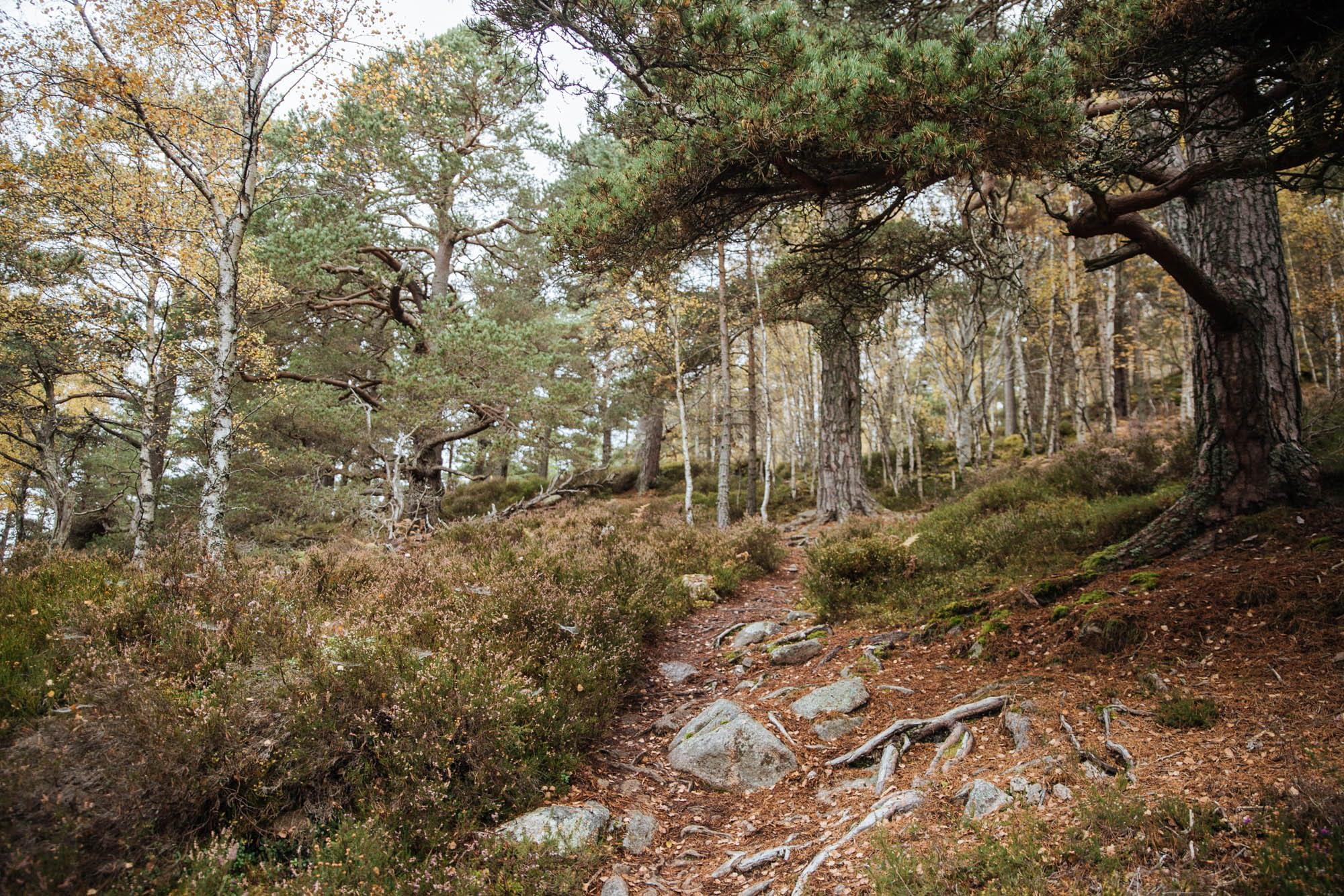 Walking the cairngorms Craigendarroch