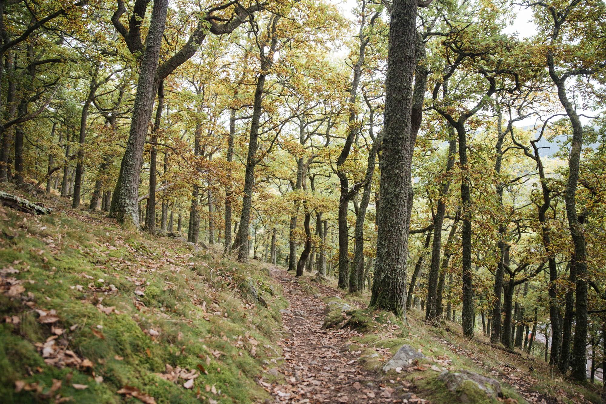 Walking cairngorms mountains route -Craigendarroch hill