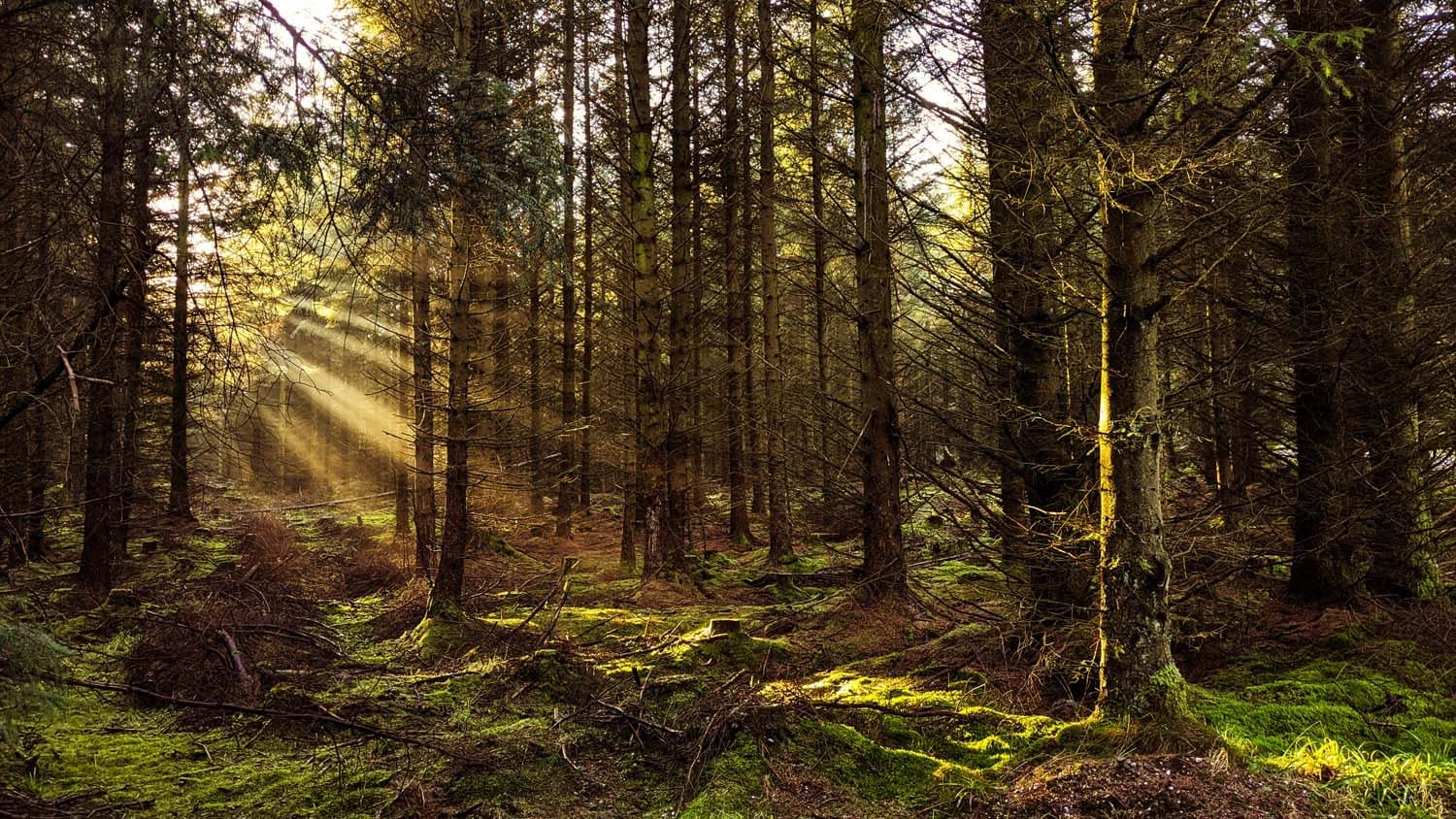 The sun peeking in through the forest